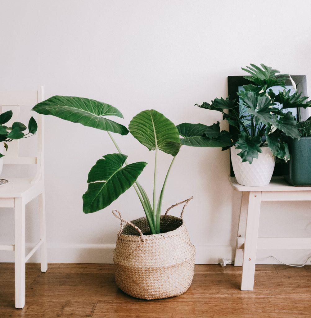 home décor trends